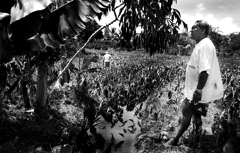 """Solidarité - Caillou Bleu. C'est le nom d'un autre squat en bord de route. A l'entrée, un champ d'un hectare est cultivé par des vieux originaires de Wallis et Futuna. Parmi eux, le président de l'association du squat, Selelino Lajekula (premier plan). Il vit au squat depuis 1994, et a choisi ce lieu précisément pour cultiver ses taros. Il fait aussi pousser du manioc, des bananes, et bien sûr des ignames. """"Pour manger, et pour la coutume. Et si des familles viennent nous en demander, on leur donne."""""""