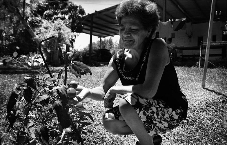 Cultiver - Eva Ofa s'est installée il y a une quinzaine d'années au squat de Kawatii. «J'habitais dans un petit appartement, mais je venais ici le week-end pour cultiver du manioc, des bananes et du taro, se souvient-elle. C'était juste pour se nourrir». Deux ans plus tard, elle a fini par s'installerlà. Aujourd'hui, manguiers, bananiers, citronniers, letchis, papayes et tomates peuplent son potager, et la cabane est devenue une maison.
