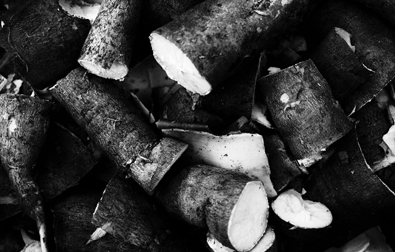 Le taro et l'igname – Ces tubercules sont fondamentaux dans la culture kanak mais aussi dans les archipels voisins, notamment Wallis et Futuna. Parties intégrantes de l'alimentation, les ignames sont également échangés lors des cérémonies coutumières. Symboliquement, l'igname représente l'homme, et le taro (photo), la femme.