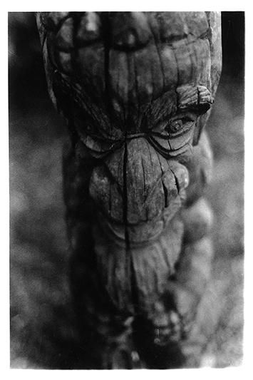 Rencontre en forêt. Sarraméa. Nouvelle-Calédonie. 2009