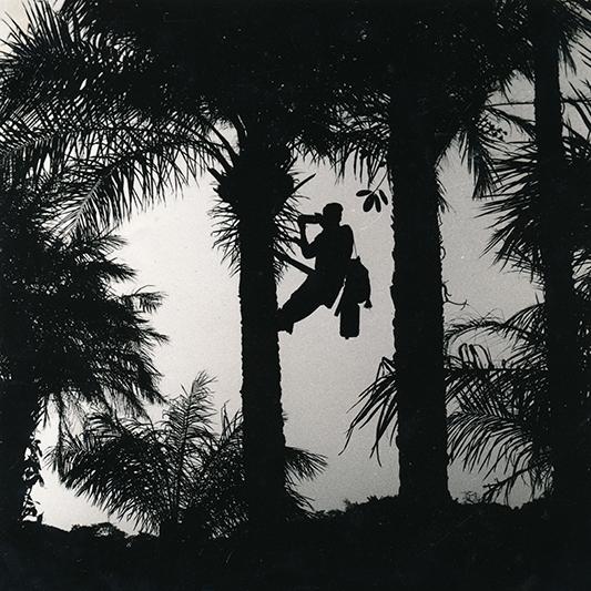 Prendre de la hauteur en Casamance, Sénégal. 2010